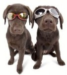 Doggy Sunglasses!