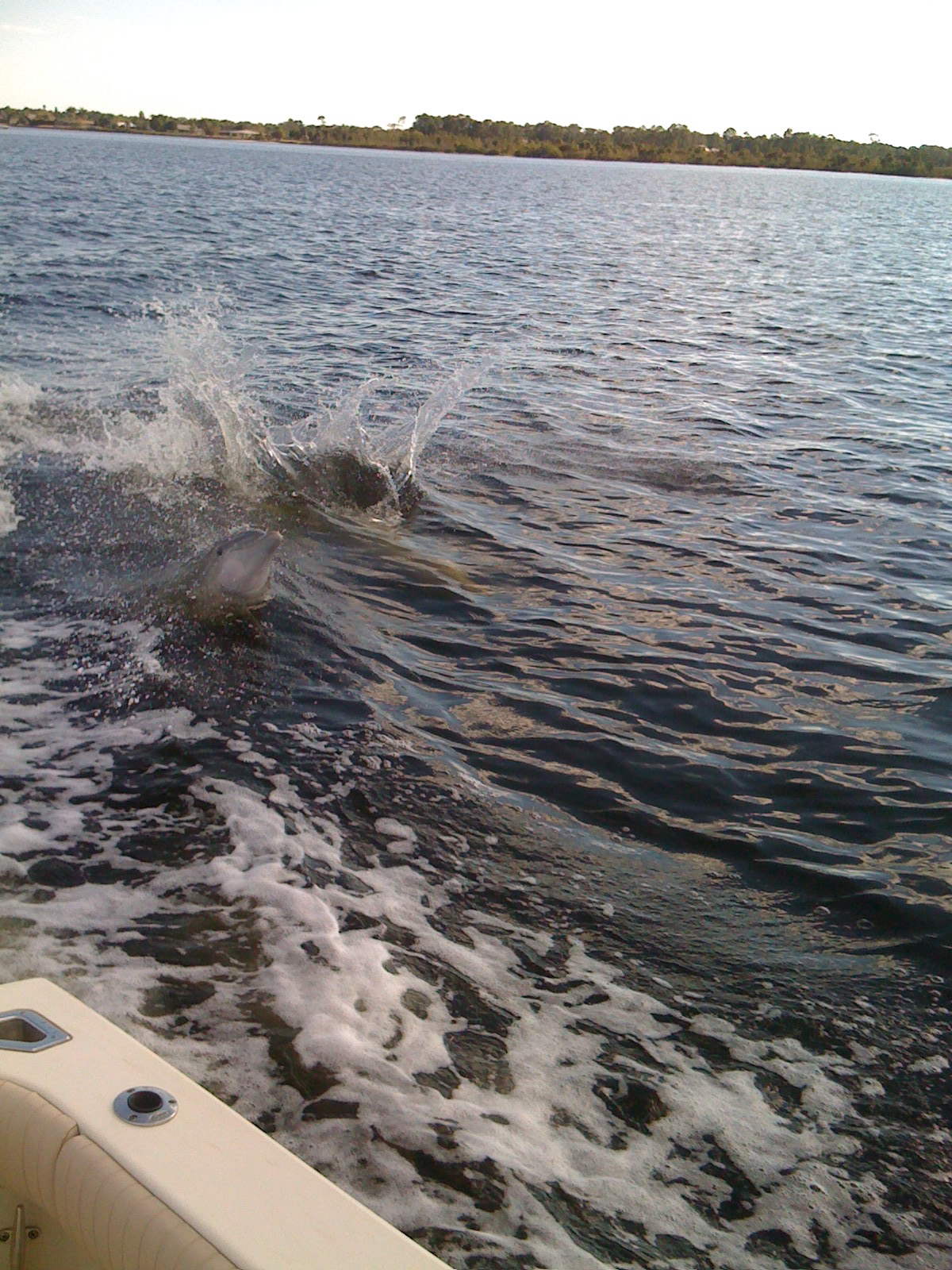 Why I live in Southwest Florida - Dolphin Sighting ...
